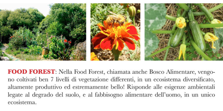 Food Forest & Orto Sinergico